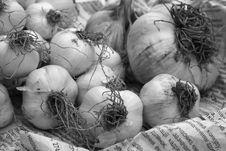 Free Garlic Royalty Free Stock Photo - 3001105