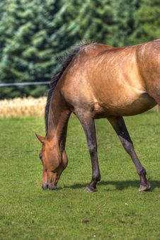 Free Horse On Field Royalty Free Stock Images - 3001309