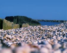 Free Blue Sky And Shells Beach Stock Photography - 3001652