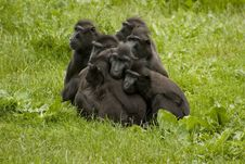 Free Family Of Baboons Royalty Free Stock Images - 3003649
