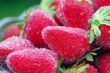 Free Strawberries Royalty Free Stock Photos - 3004448