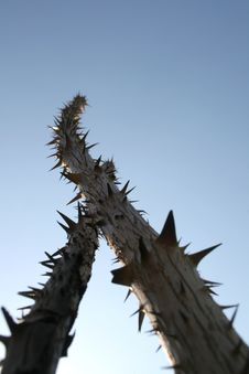 Free Sticks With Thorns Stock Photography - 3005742