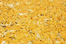 Free Corn Stock Photo - 3006490