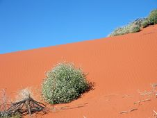 Red Sand Dune 133 Royalty Free Stock Image