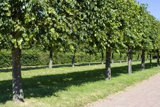 Free Trees Grove Royalty Free Stock Photography - 3007277