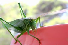 Free Grasshopper Royalty Free Stock Images - 3007639