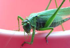 Free Grasshopper Stock Image - 3007671