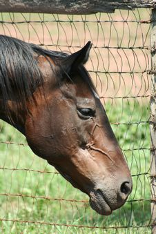 Free Horse Portrait Stock Photo - 3007690