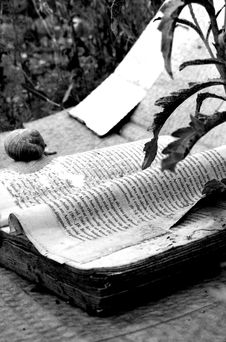 Book And Snail Stock Image