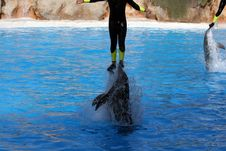 Free Man Jumping With Dolphins Stock Photography - 3009032