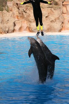 Free Man Jumping With Dolphins Royalty Free Stock Photos - 3009138