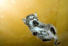 Free Kitten Stock Photos - 3009163