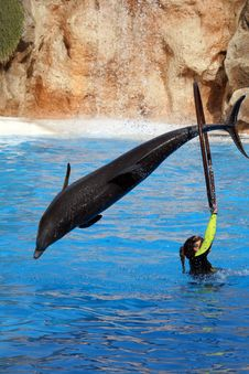 Free Dolphin Jumping In A Ring Royalty Free Stock Images - 3009209
