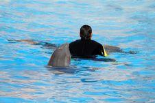 Dolphin Behind A Man Royalty Free Stock Photos