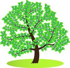 Free Green Tree. Royalty Free Stock Photos - 30001818