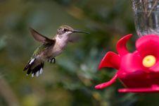 Free Hummingbird Flying To Feeder Stock Photos - 30006193