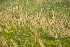 Free Field Stock Photography - 30006942