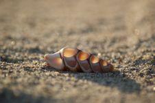 Free Seashell Royalty Free Stock Photography - 30014667