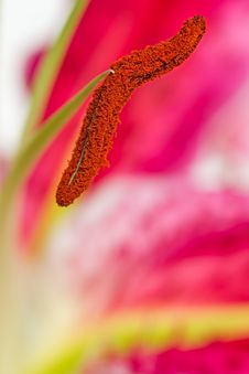 Free Flower Stock Photography - 30015832