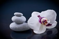 Free Zen Concept Stones And Orchid Royalty Free Stock Photos - 30016098