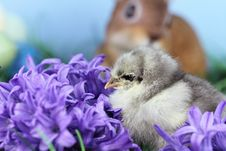 Little Easter Chick Stock Photos
