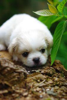 Free Baby Dog Stock Photography - 30020622