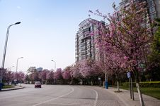 Free City Road With Bauhinia Flowers Stock Image - 30023941