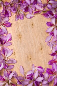 Free Frame With Bauhinia Petals Royalty Free Stock Image - 30024536
