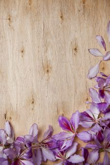 Free Frame With Bauhinia Petals Stock Photo - 30024610