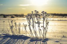 Free Winter Sunbath Stock Photos - 30032533