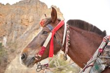 Free The Brown Horse Head Stock Photography - 30034992