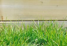 Free Greeny Grass Royalty Free Stock Images - 30035179