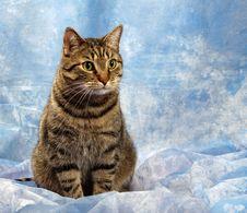 Free Beautiful  European Cat Stock Image - 30038681