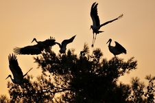 Free Tree Laid Out On A Flock Of Storks Stock Image - 30038711