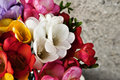 Free Spring Flowers Royalty Free Stock Photos - 30045308