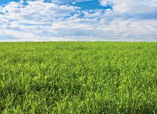 Free Green Field Royalty Free Stock Photography - 30043537