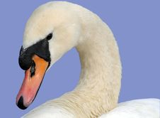 Free White Swan Royalty Free Stock Images - 30046609