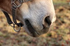 Free Brown Horse Stock Image - 30049131