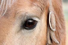 Free Quite Near Horse Stock Photo - 30049230