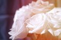 Free Beautiful Roses Royalty Free Stock Images - 30053159