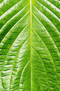 Free Leaf Texture Royalty Free Stock Images - 30054299