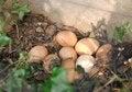 Free Ground Fresh Eggs Royalty Free Stock Photo - 30057355