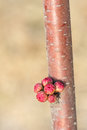 Free Flower Buds Stock Images - 30058844