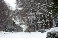 Free Snow Covered Street And Treeline Royalty Free Stock Images - 30053099