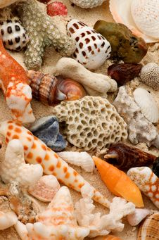 Free Ocean Shell Background Royalty Free Stock Photography - 30053477