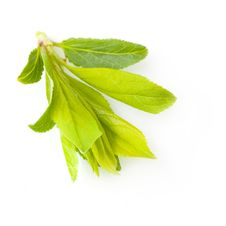 Free Young Green Leaves Royalty Free Stock Photos - 30053518