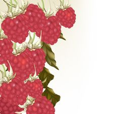 Free Beautiful Vector Background With Realistic Pink  Raspberry Stock Photo - 30054240