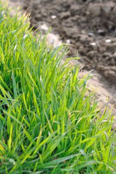 Free Green Grass Royalty Free Stock Photo - 30057255