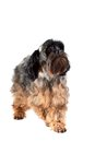 Free Decorative Doggie Stock Photography - 30063432
