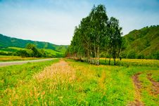 Free Rural Landscape With Birch Trees Planted Along The Road. Stock Photos - 30062423